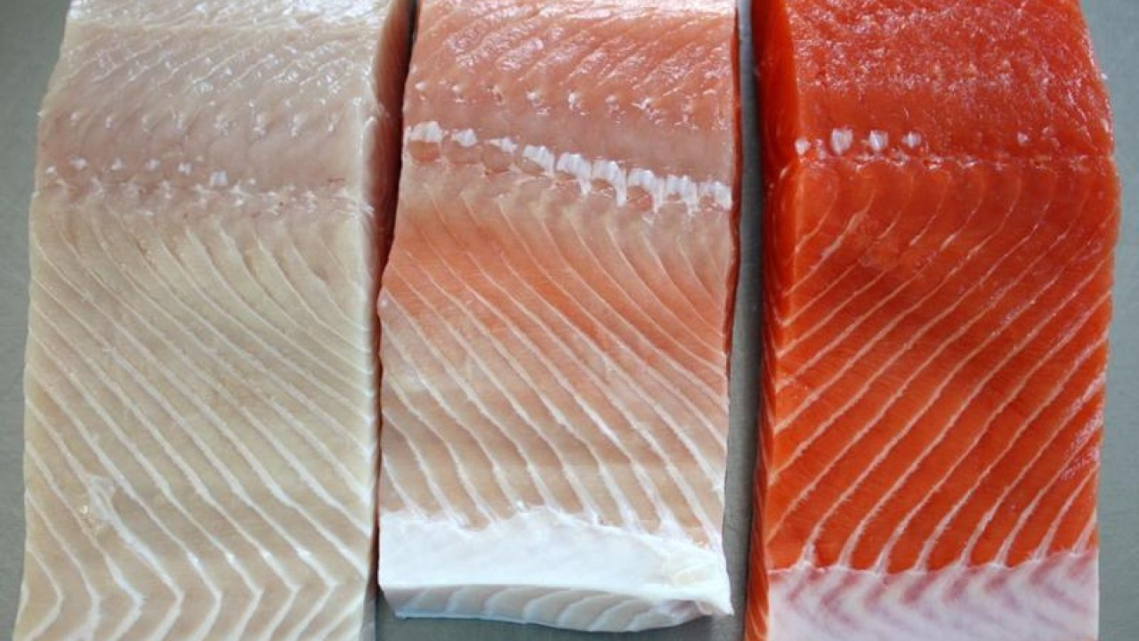 What Makes King Salmon Flesh Red or White?